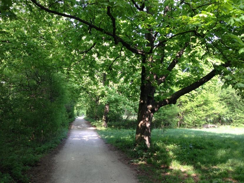 Walking Track - fairytale much?