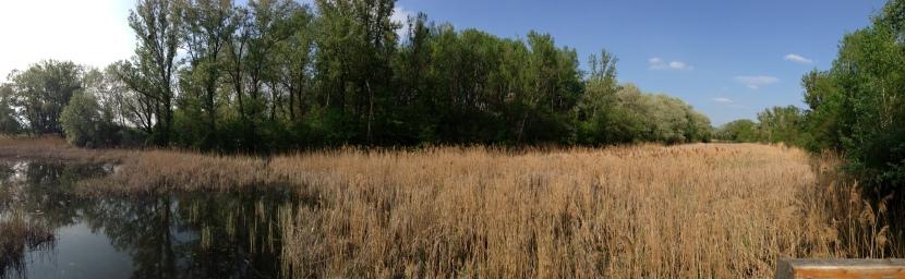 River Wetlands