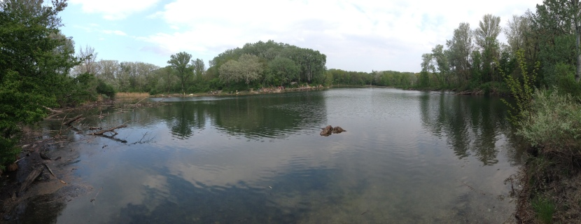 Swimming Island